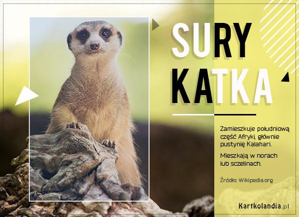 eKartki elektroniczne z tagiem: Kartki zwierzęta Surykatka,