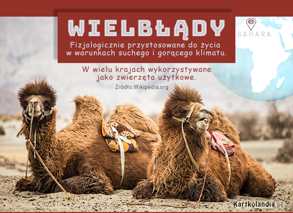 eKartki elektroniczne z tagiem: Kartki zwierzęta Wielbłądy,