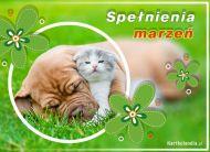 eKartki elektroniczne z tagiem: Kot Zwierzaki z życzeniami,