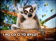 eKartki Zwierzęta Ciekawski Lemur,