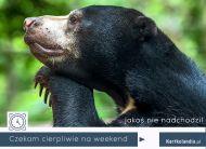 eKartki Zwierzęta Czekam na weekend,