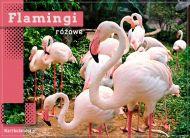 eKartki Zwierzęta Flamingi różowe,