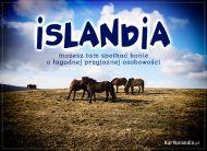eKartki Zwierzęta Islandzkie konie,