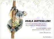 eKartki Zwierzęta Koala australijski,