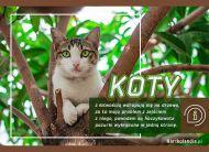 eKartki elektroniczne z tagiem: Kot Kocie pazurki,