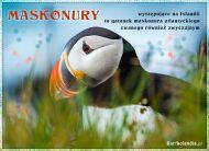 eKartki Zwierzęta Maskonury islandzkie,
