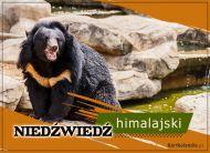 eKartki Zwierzęta Niedźwiedź himalajski,