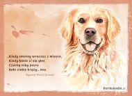 eKartki elektroniczne z tagiem: e Kartki z psem Nos psa,