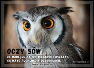 eKartki Zwierzęta Oczy sów,