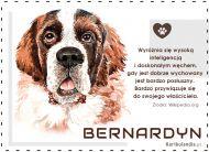 eKartki elektroniczne z tagiem: e-Kartka z psem Pies Bernardyn,