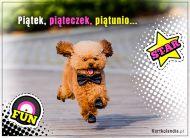 eKartki elektroniczne z tagiem: e Kartki z psem Piątek, piąteczek, piątunio!,