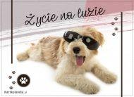 eKartki elektroniczne z tagiem: e-Kartka z psem Życie na luzie,