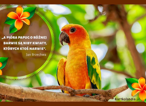 eKartki elektroniczne z tagiem: Papuga Barwna papuga,