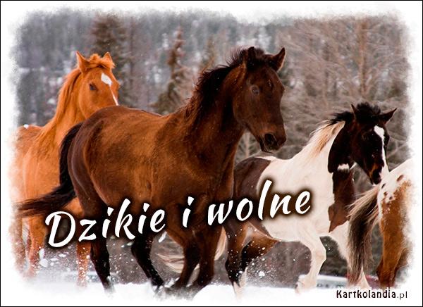 eKartki elektroniczne z tagiem: Kartki zwierzęta Dzikie i wolne,