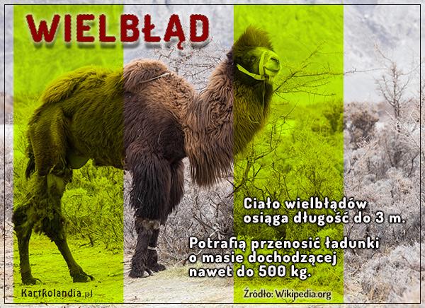 eKartki elektroniczne z tagiem: Kartki zwierzęta Kartka - Wielbłąd,