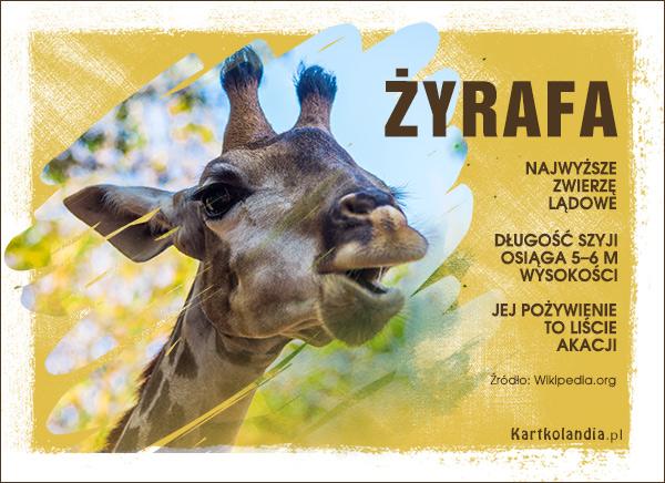 eKartki elektroniczne z tagiem: Kartki z żyrafą Żyrafa,