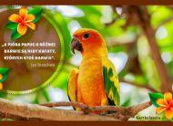 eKartki elektroniczne z tagiem: e Kartki z muzyką Barwna papuga,