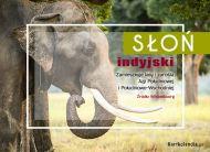 eKartki elektroniczne z tagiem: e Kartki z muzyką Słoń indyjski,