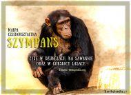 eKartki elektroniczne z tagiem: Kartki z muzyką Szympans,