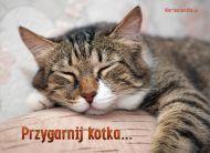 eKartki Zwierzêta Przygarnij kotka,