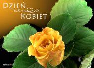 eKartki Dzieñ Kobiet Kwiat na 8 marca,