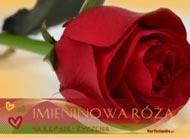 eKartki Imieninowe Luksusowy kwiat,