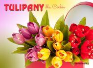 eKartki Imieninowe Tulipany na imieniny,