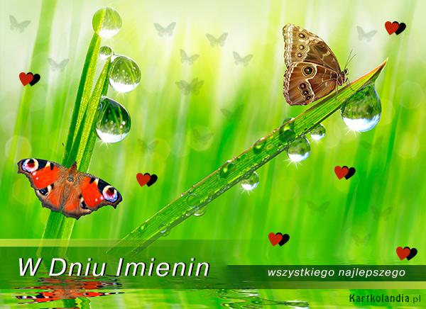 Motyle przesyłają życzenia