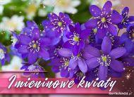 eKartki elektroniczne z tagiem: e Kartki z muzyką Imieninowe kwiaty,
