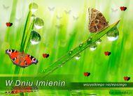 eKartki Imieninowe Motyle przesyłają życzenia,