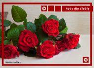 eKartki elektroniczne z tagiem: e-Kartki na imieniny Piękne róże dla Ciebie,