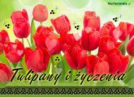 eKartki Imieninowe Tulipany i życzenia,