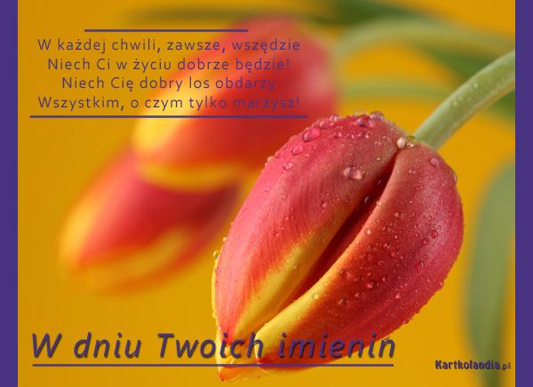 Tulipanki dla Ciebie