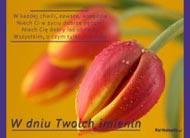 eKartki Imieninowe Tulipanki dla Ciebie,