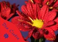 eKartki Imieninowe Życzenia w kroplach rosy,