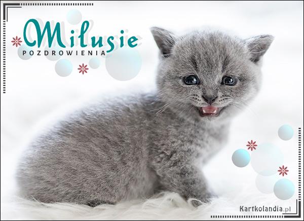 eKartki elektroniczne z tagiem: e-Kartka pozdrowienia Milusie pozdrowienia!,