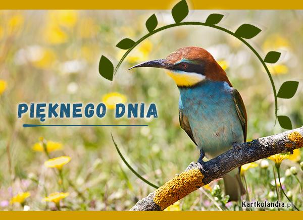 eKartki elektroniczne z tagiem: e-Kartka pozdrowienia Pięknego dnia!,