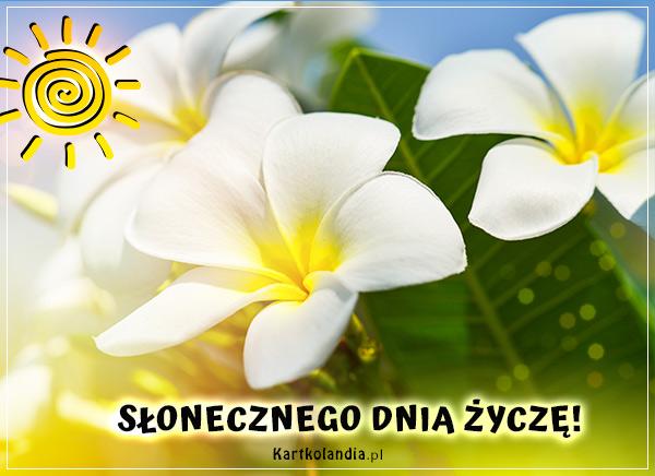 eKartki elektroniczne z tagiem: e-Kartka pozdrowienia Słonecznego dnia!,