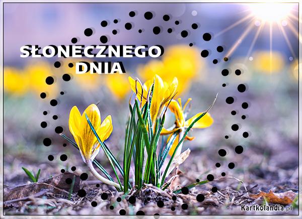 eKartki elektroniczne z tagiem: e-Kartka pozdrowienia Słoneczny dzień!,