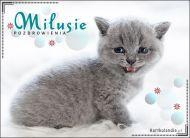 eKartki Wyraź uczucia -> Pozdrowienia Milusie pozdrowienia!,