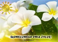 eKartki Wyraź uczucia -> Pozdrowienia Słonecznego dnia!,