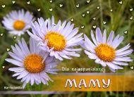 eKartki Dzieñ Matki Kwiatki na Dzieñ Matki,