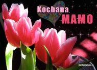 eKartki Dzieñ Matki Tulipany dla Mamy,