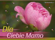 eKartki Dzień Matki Dla Ciebie Mamo,