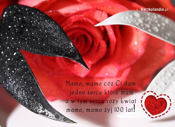 Róża dla Mamy