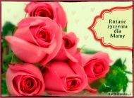 eKartki elektroniczne z tagiem: e Pocztówki online Różane życzenia,