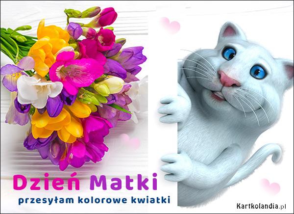 eKartki elektroniczne z tagiem: Kot Przesyłam kolorowe kwiatki,