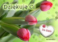 eKartki Wyra¼ uczucia Kartka z tulipanami,
