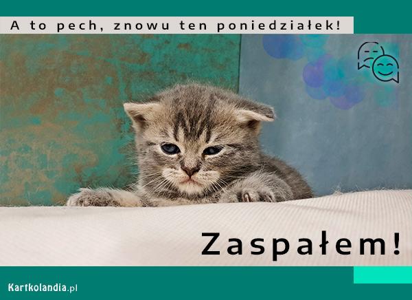eKartki elektroniczne z tagiem: Kot Znowu ten poniedziałek!,