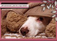 eKartki elektroniczne z tagiem: e-Kartka z psem Ból samotności,